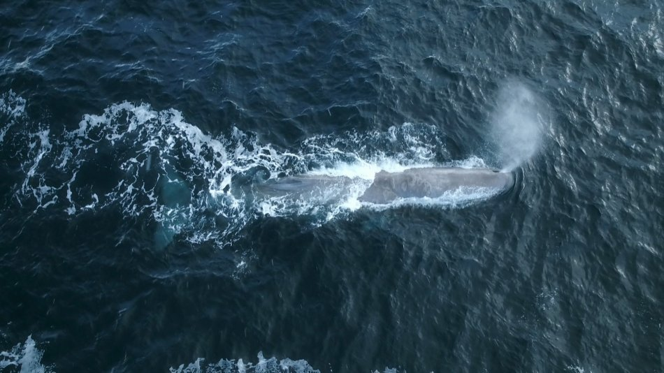 Balena di Plastica, una straordinaria storia nel documentario di Sky TG24