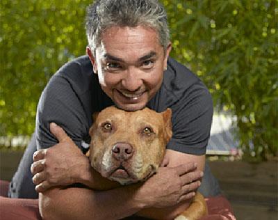 Cesar millan è il dog whisperer nuova serie nel pomeriggio di