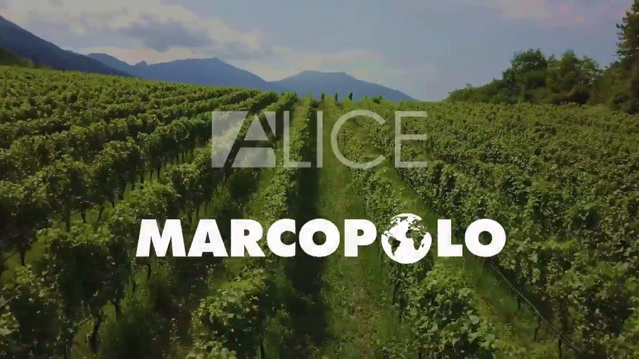 Alma TV, Alice e Marcopolo insieme sul canale 65 DTT