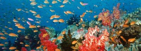 Nel giorno del Venerdì Santo si celebra in tv anche l'Earth Day 2011